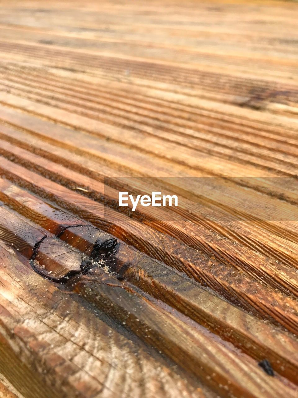 wood - material, pattern, no people, close-up, brown, selective focus, textured, full frame, high angle view, outdoors, animal, day, nature, invertebrate, animals in the wild, animal wildlife, backgrounds, insect, animal themes, wood