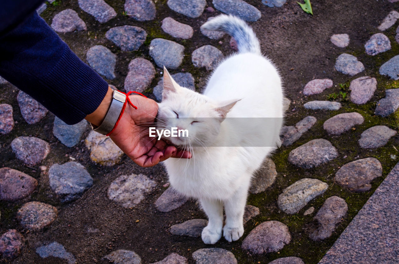 Cropped Hand Pampering White Cat On Footpath