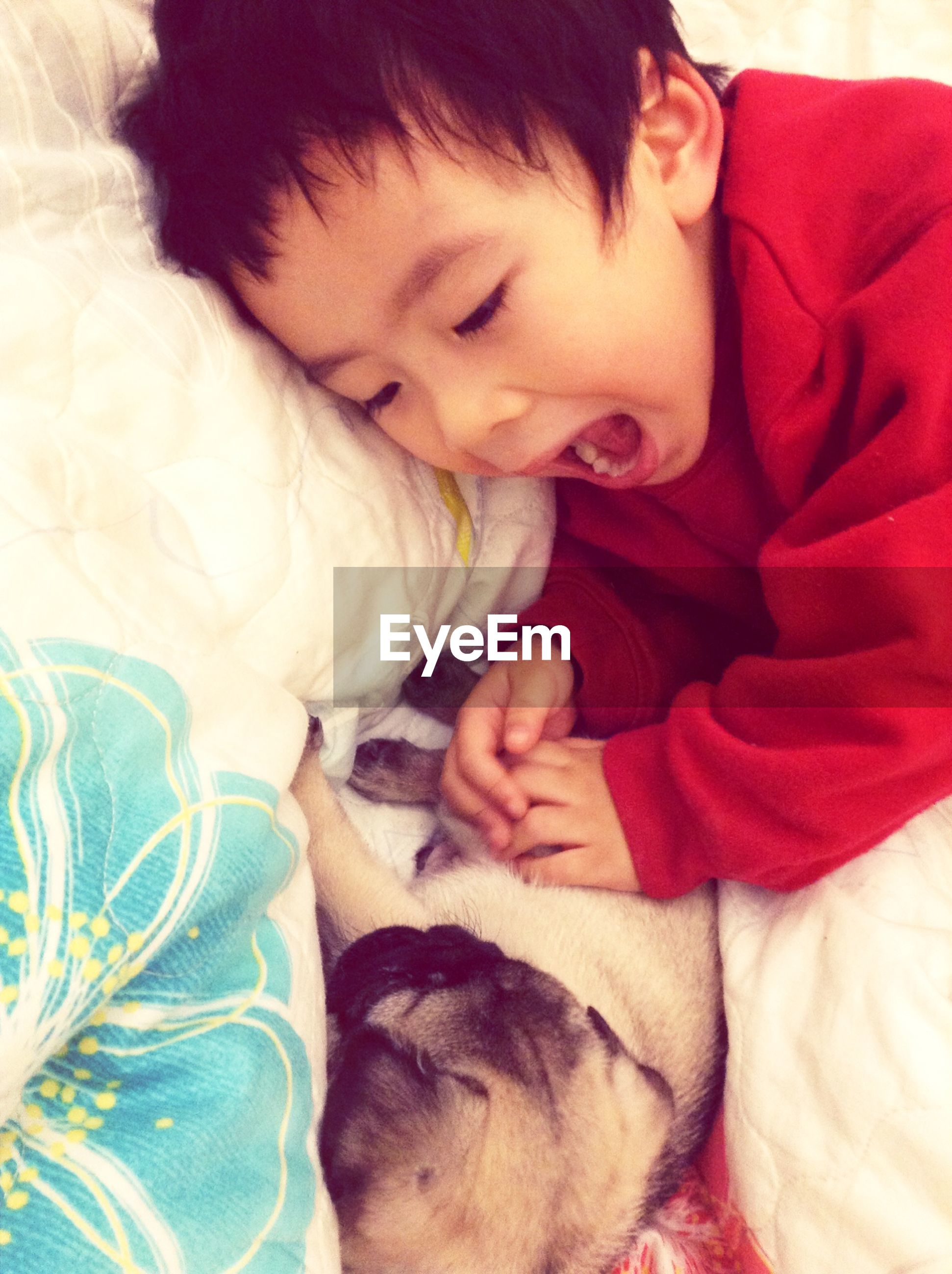 indoors, childhood, bed, sleeping, innocence, cute, pets, relaxation, person, elementary age, lying down, domestic animals, toddler, home interior, eyes closed, baby, lifestyles, babyhood
