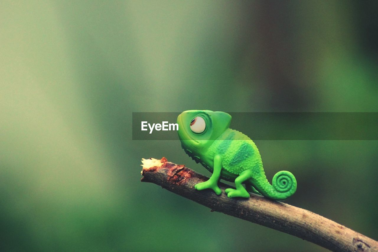 green color, focus on foreground, animal themes, one animal, animal, animals in the wild, animal wildlife, close-up, no people, vertebrate, day, reptile, nature, amphibian, outdoors, frog, selective focus, plant, green, animal representation