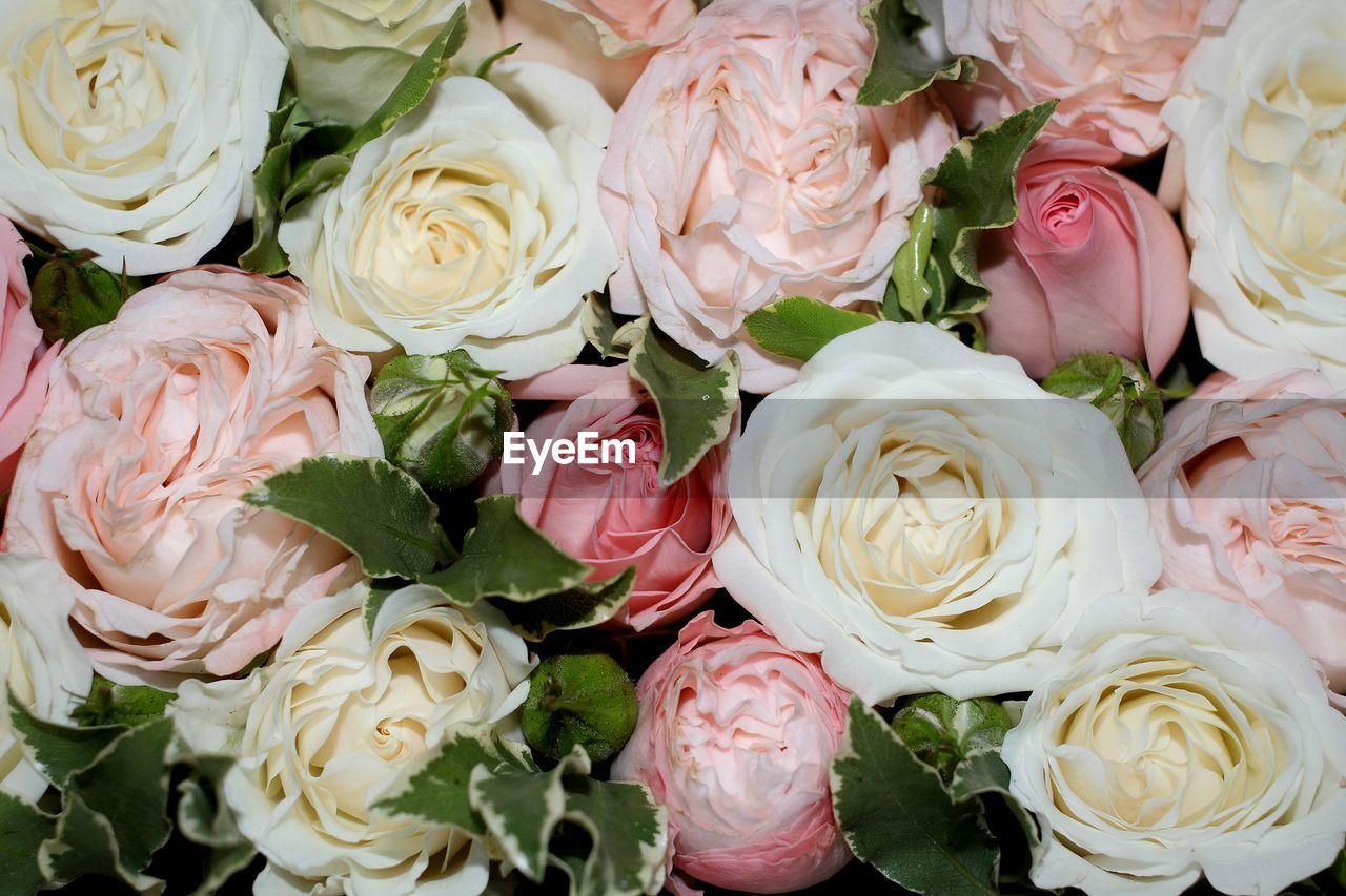 Full Frame Shot Of Roses For Sale At Market