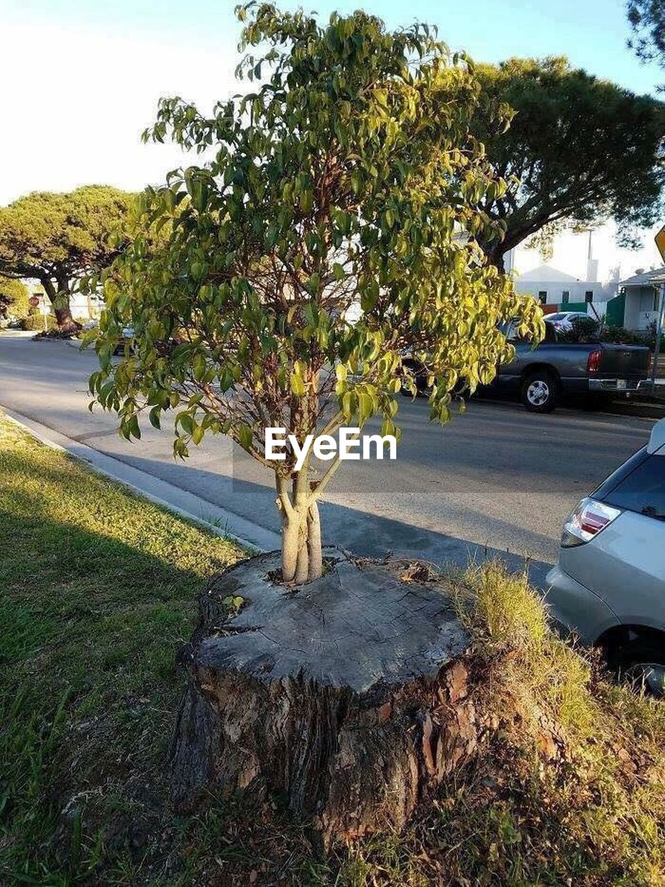 tree, car, transportation, growth, no people, day, road, land vehicle, outdoors, nature, plant, sky