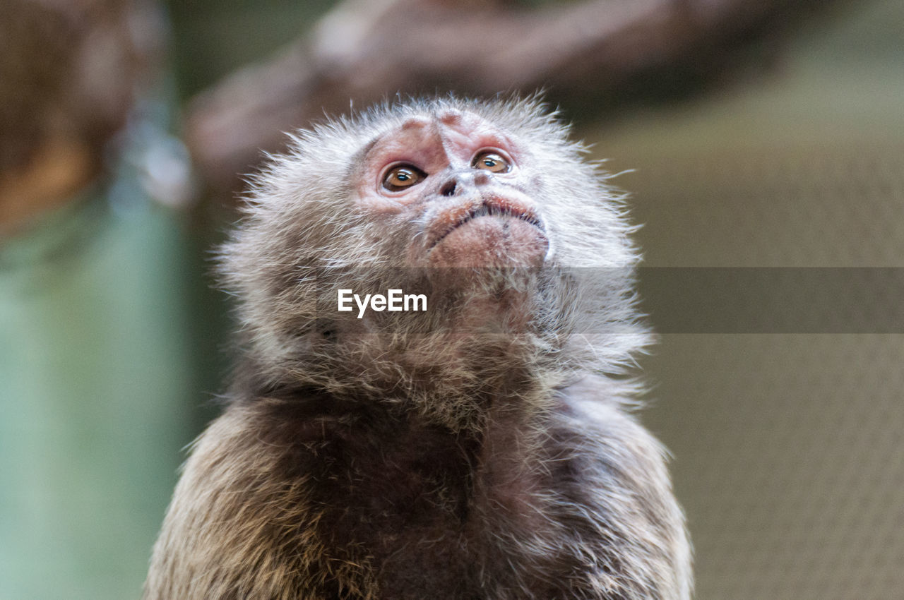 animal themes, one animal, animals in the wild, animal wildlife, monkey, mammal, no people, focus on foreground, looking at camera, young animal, close-up, portrait, day, outdoors, nature, bird, japanese macaque