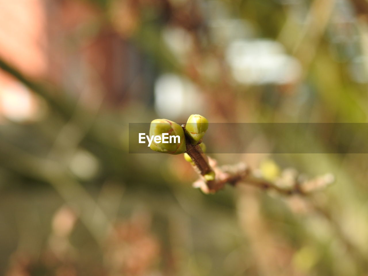 growth, nature, plant, no people, outdoors, close-up, day, beauty in nature