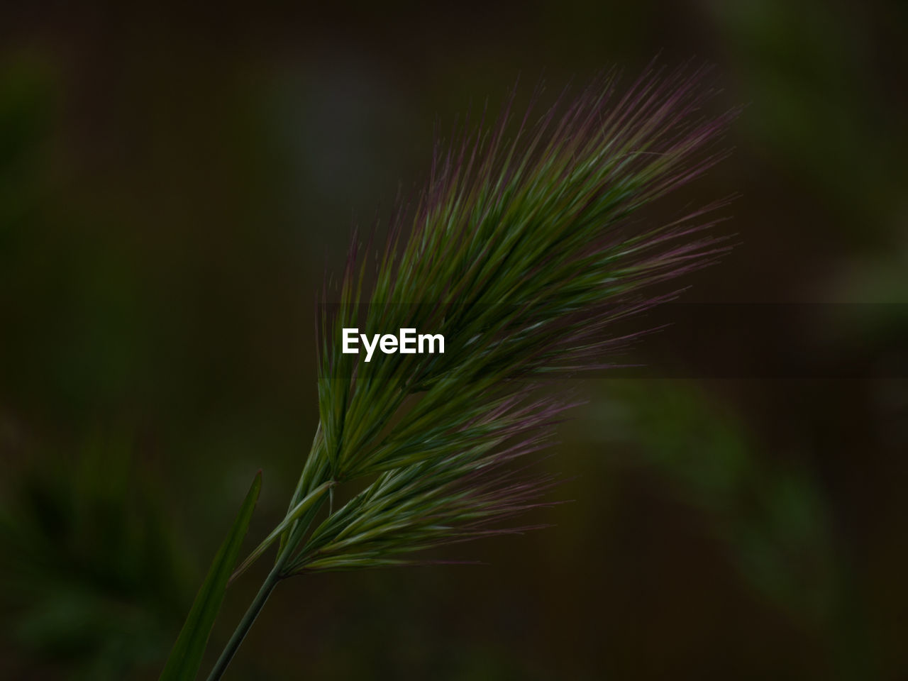 plant, growth, focus on foreground, close-up, green color, beauty in nature, no people, nature, day, tranquility, outdoors, selective focus, fragility, freshness, vulnerability, leaf, plant part, plant stem, land, green, stalk