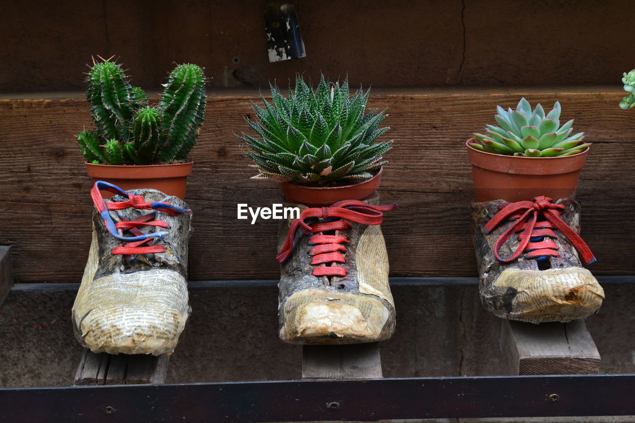 no people, potted plant, side by side, wood - material, table, in a row, still life, plant, freshness, indoors, food, day, choice, food and drink, variation, growth, arrangement, retail, representation, retail display