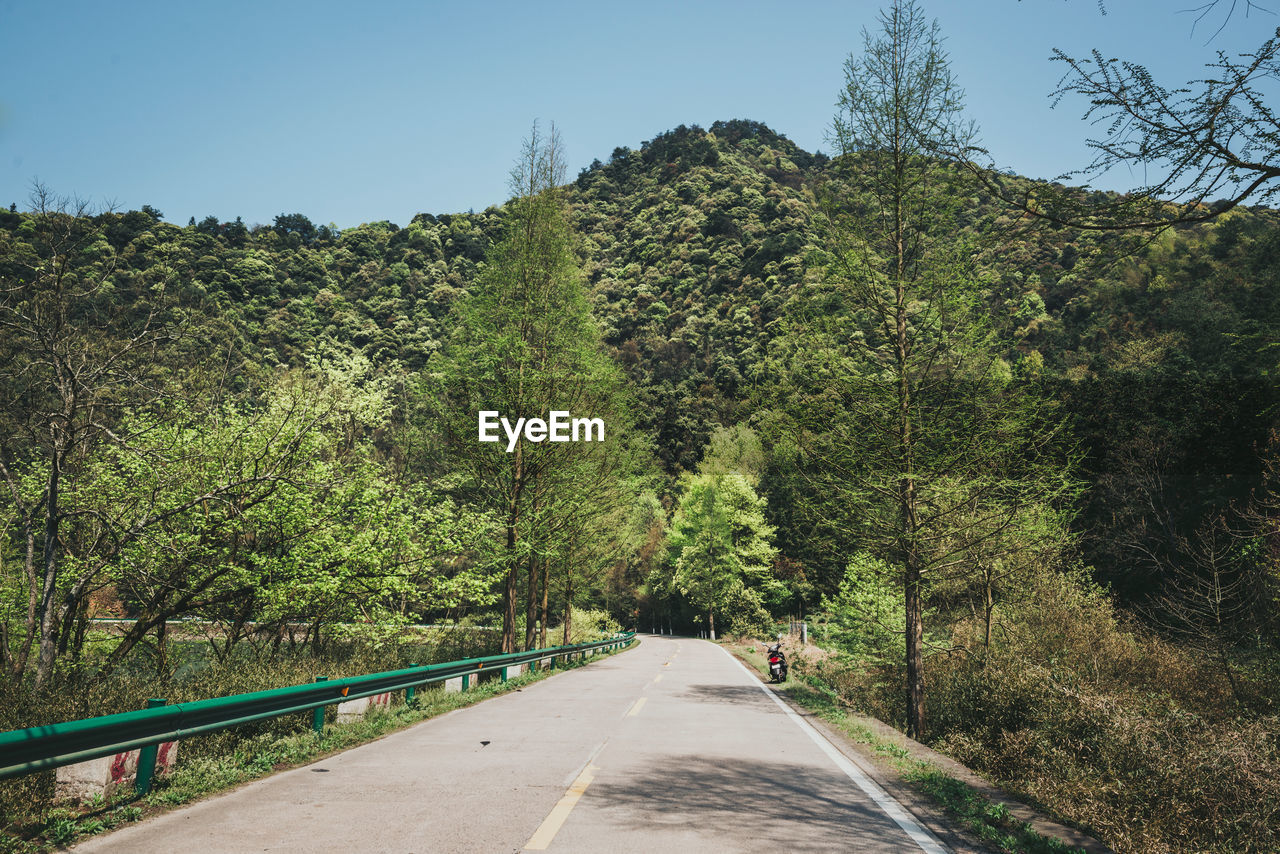 tree, plant, direction, the way forward, road, transportation, growth, beauty in nature, nature, sky, day, green color, no people, tranquility, non-urban scene, mountain, clear sky, tranquil scene, scenics - nature, land, outdoors, diminishing perspective, crash barrier