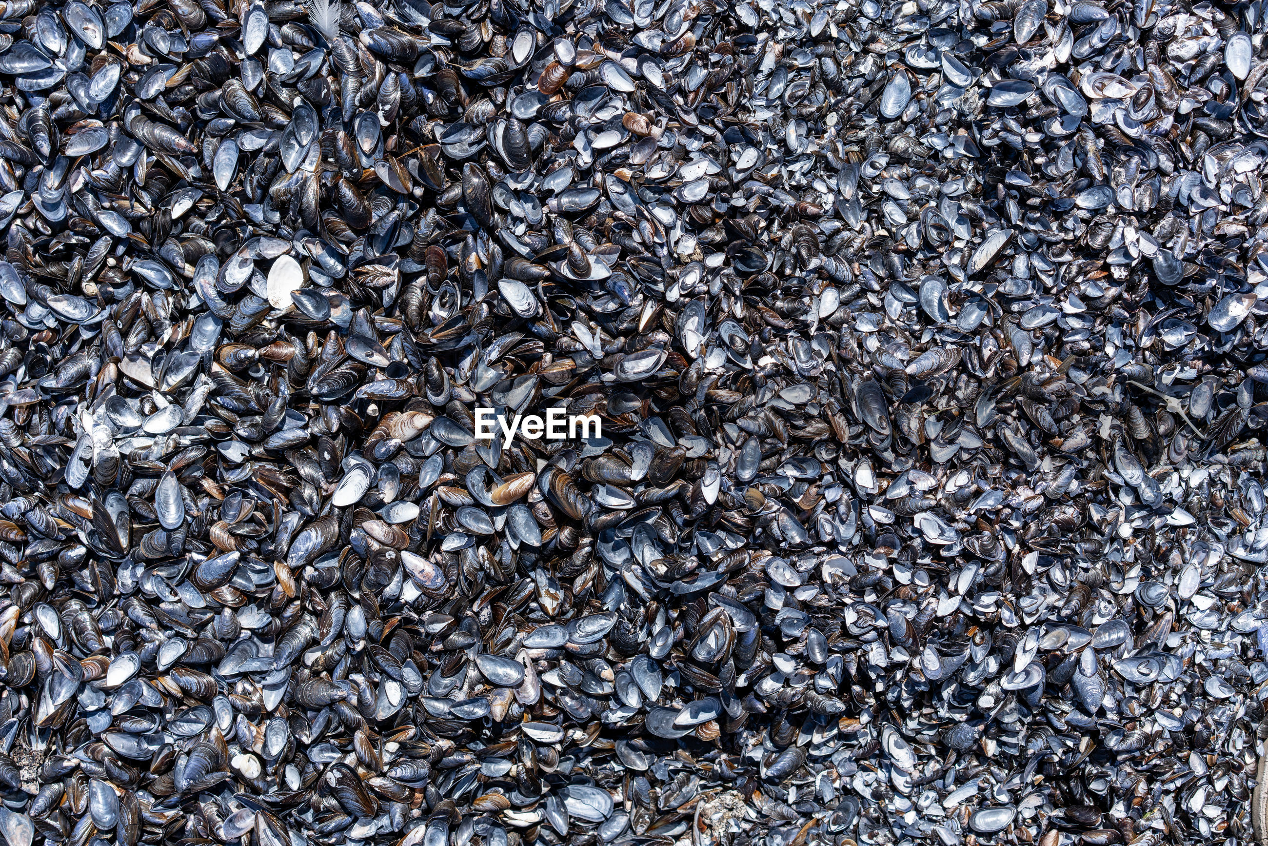 Full frame shot of mussels for sale at market
