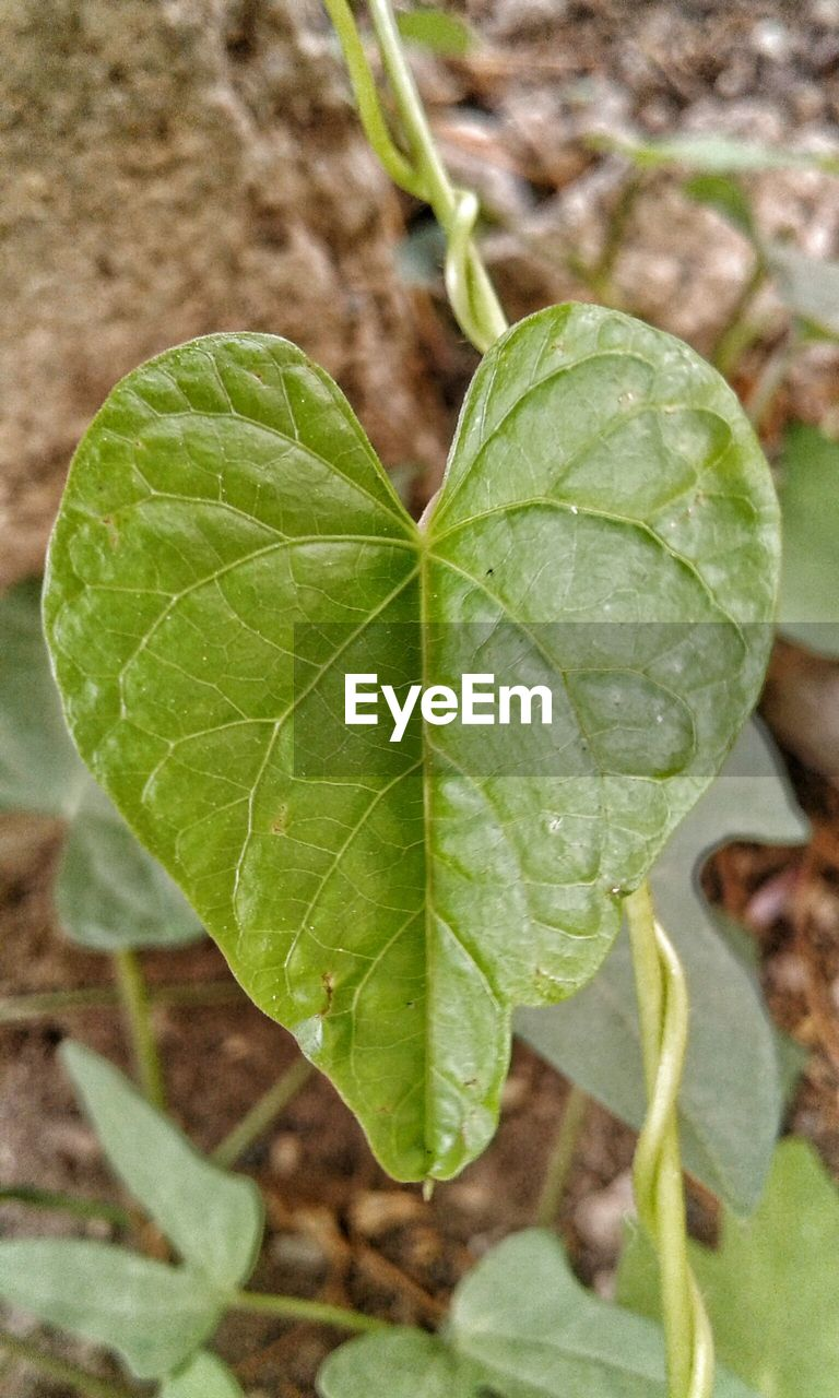 leaf, close-up, focus on foreground, day, green color, nature, growth, plant, no people, outdoors, fragility, freshness