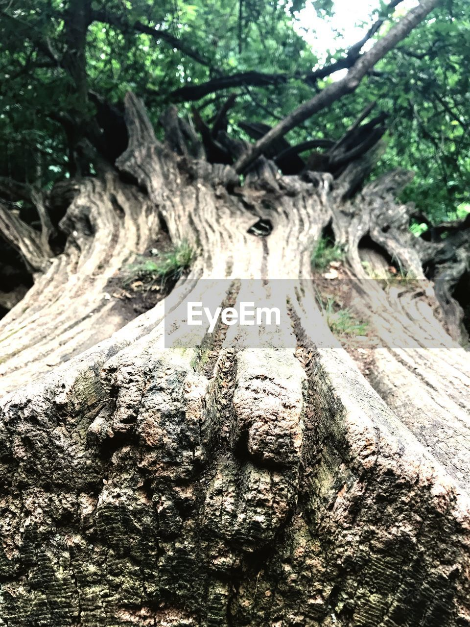 tree, tree trunk, wood - material, nature, forest, outdoors, day, no people, bark, branch, animal themes, close-up, reptile, dead tree