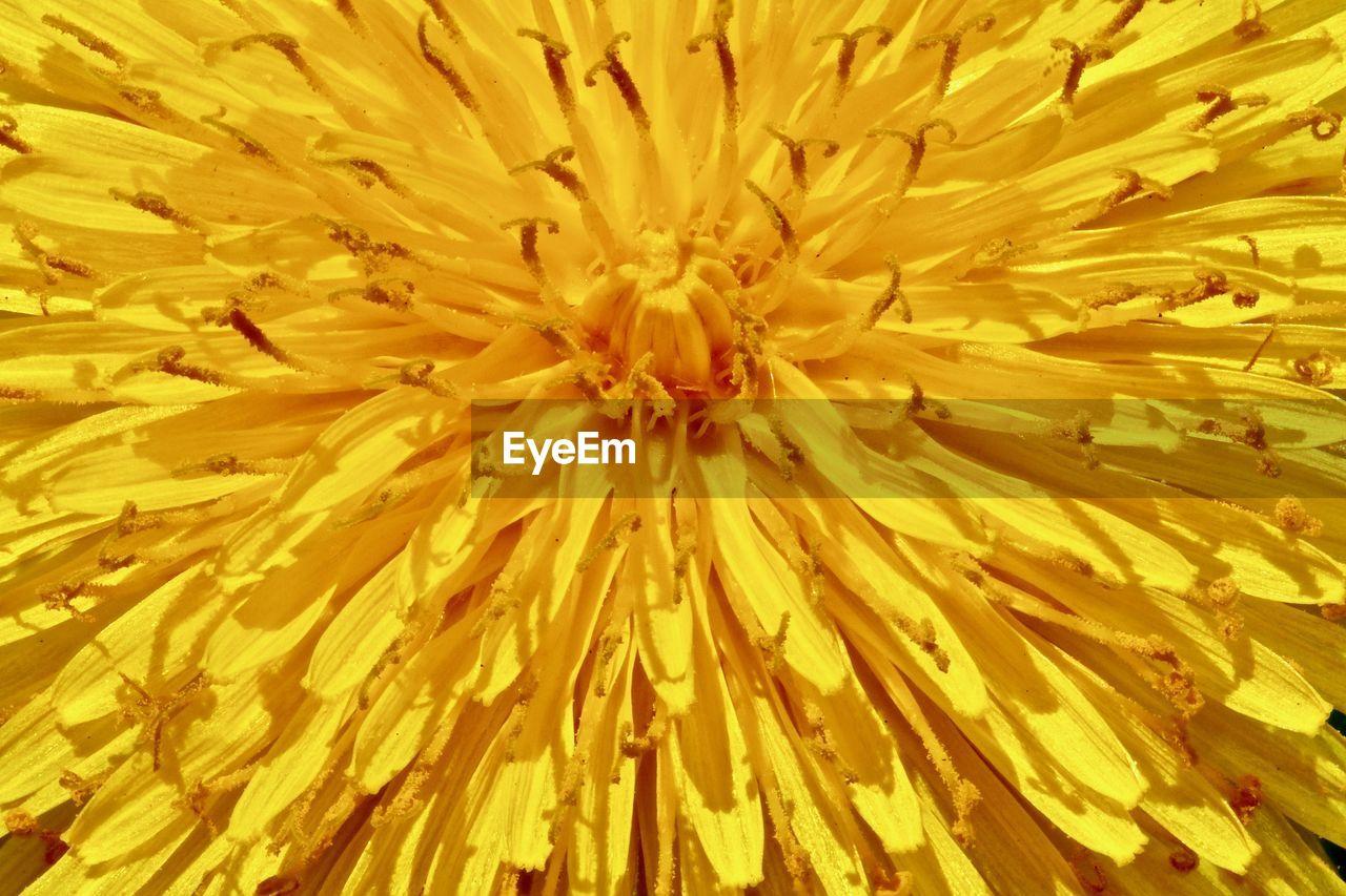 FULL FRAME SHOT OF YELLOW POLLEN