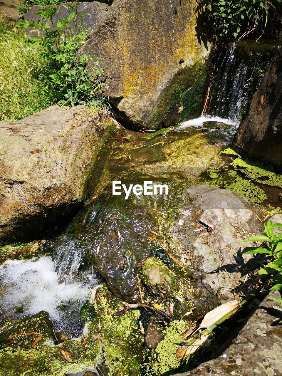 water, rock, rock - object, solid, nature, flowing water, beauty in nature, scenics - nature, moss, no people, motion, flowing, day, waterfall, plant, forest, long exposure, non-urban scene, downloading, outdoors, stream - flowing water, falling water, shallow