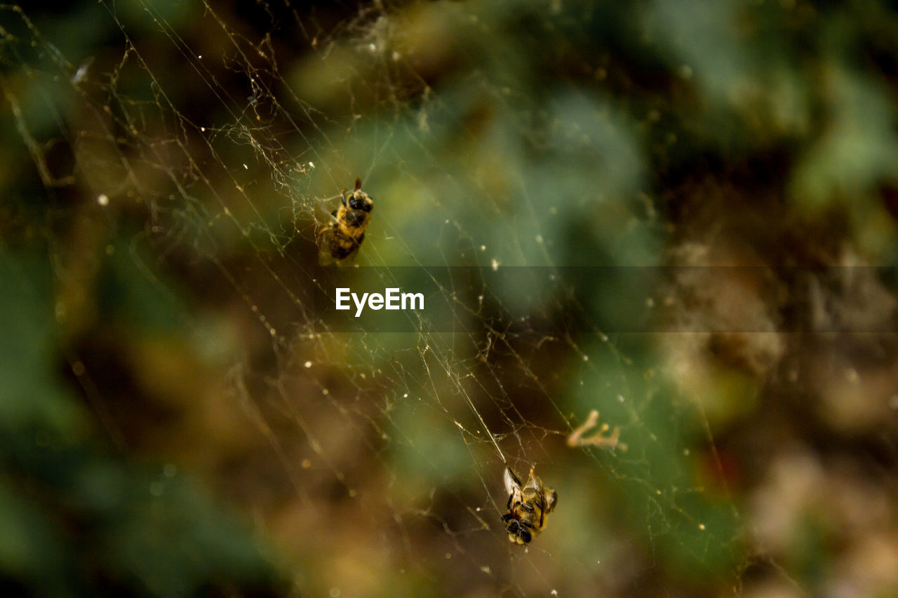 spider web, invertebrate, fragility, close-up, insect, animal, spider, animals in the wild, animal themes, animal wildlife, arachnid, selective focus, one animal, vulnerability, arthropod, focus on foreground, no people, nature, survival, day, web, outdoors, animal leg, complexity