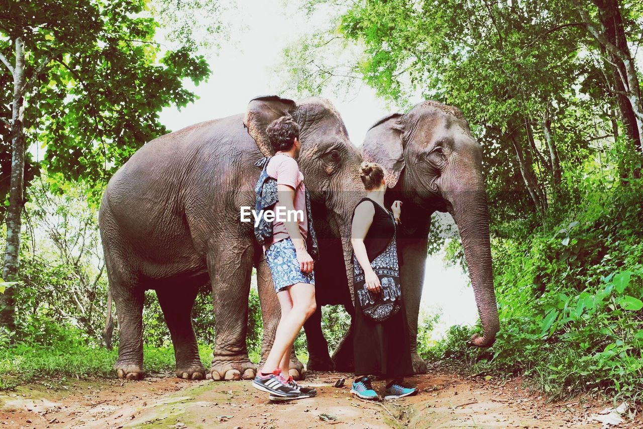 elephant, tree, mammal, real people, trunk, one animal, indian elephant, standing, full length, forest, animals in the wild, animal trunk, day, nature, outdoors, safari animals, domestic animals, lifestyles, leisure activity, animal wildlife, young animal, growth, bonding, elephant calf, friendship, men, beauty in nature, one person, young adult, people