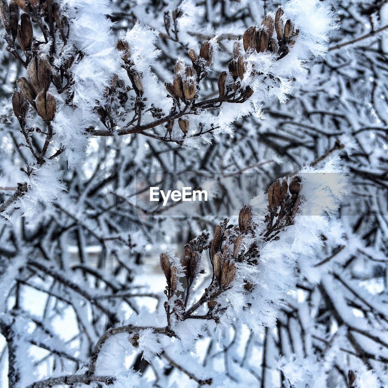 winter, snow, cold temperature, nature, weather, no people, beauty in nature, tree, outdoors, day, branch, backgrounds, bare tree, snowing, close-up, snowflake, spruce tree