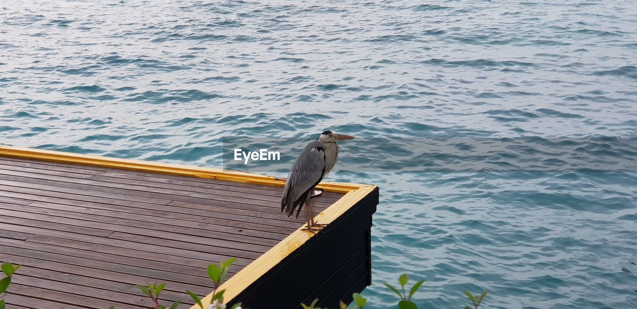HIGH ANGLE VIEW OF SEAGULL PERCHING ON WOODEN POST