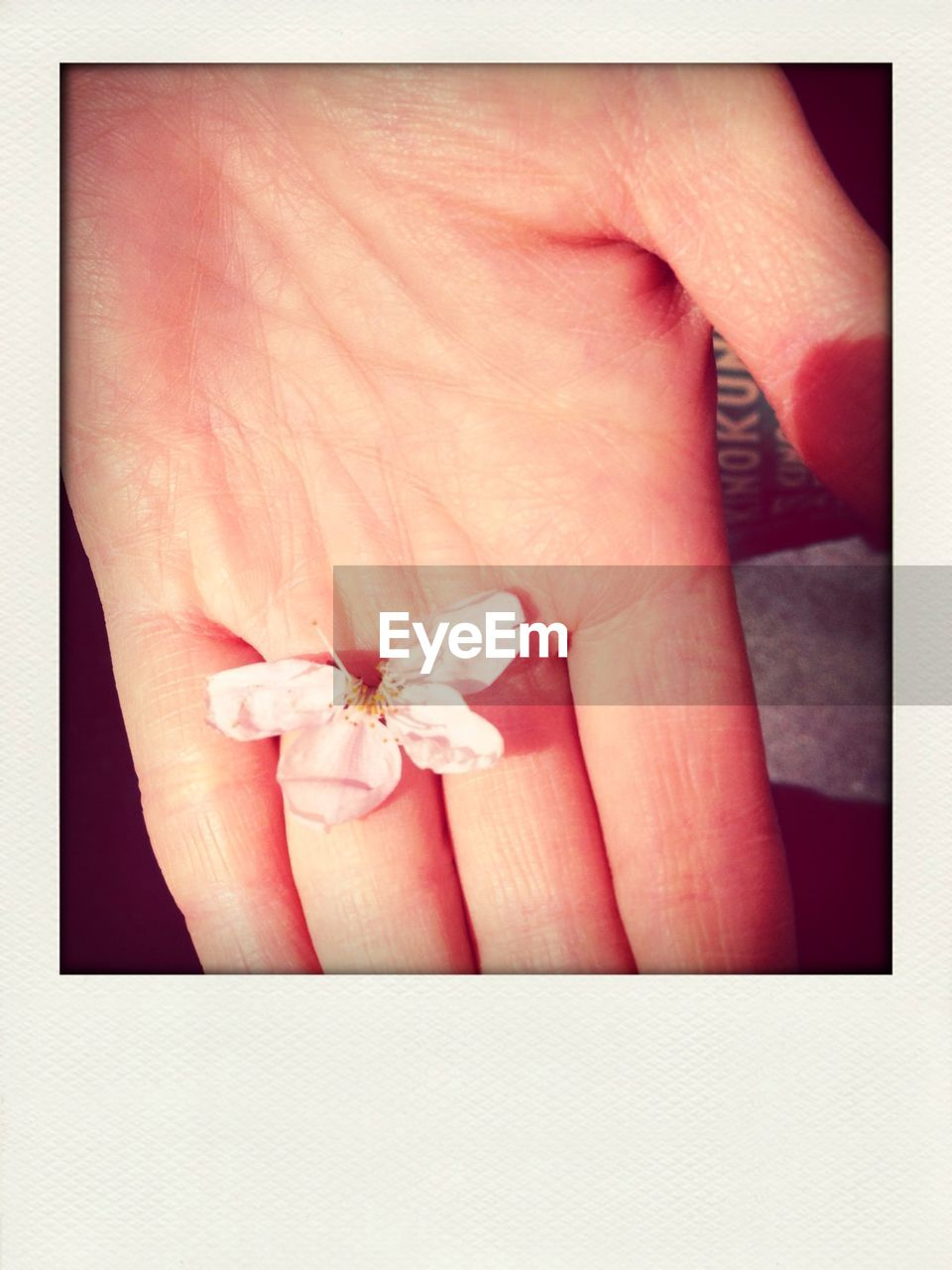 human hand, flower, close-up, gift, human body part, real people, one person, fragility, petal, indoors, day, flower head, palm, nature, people
