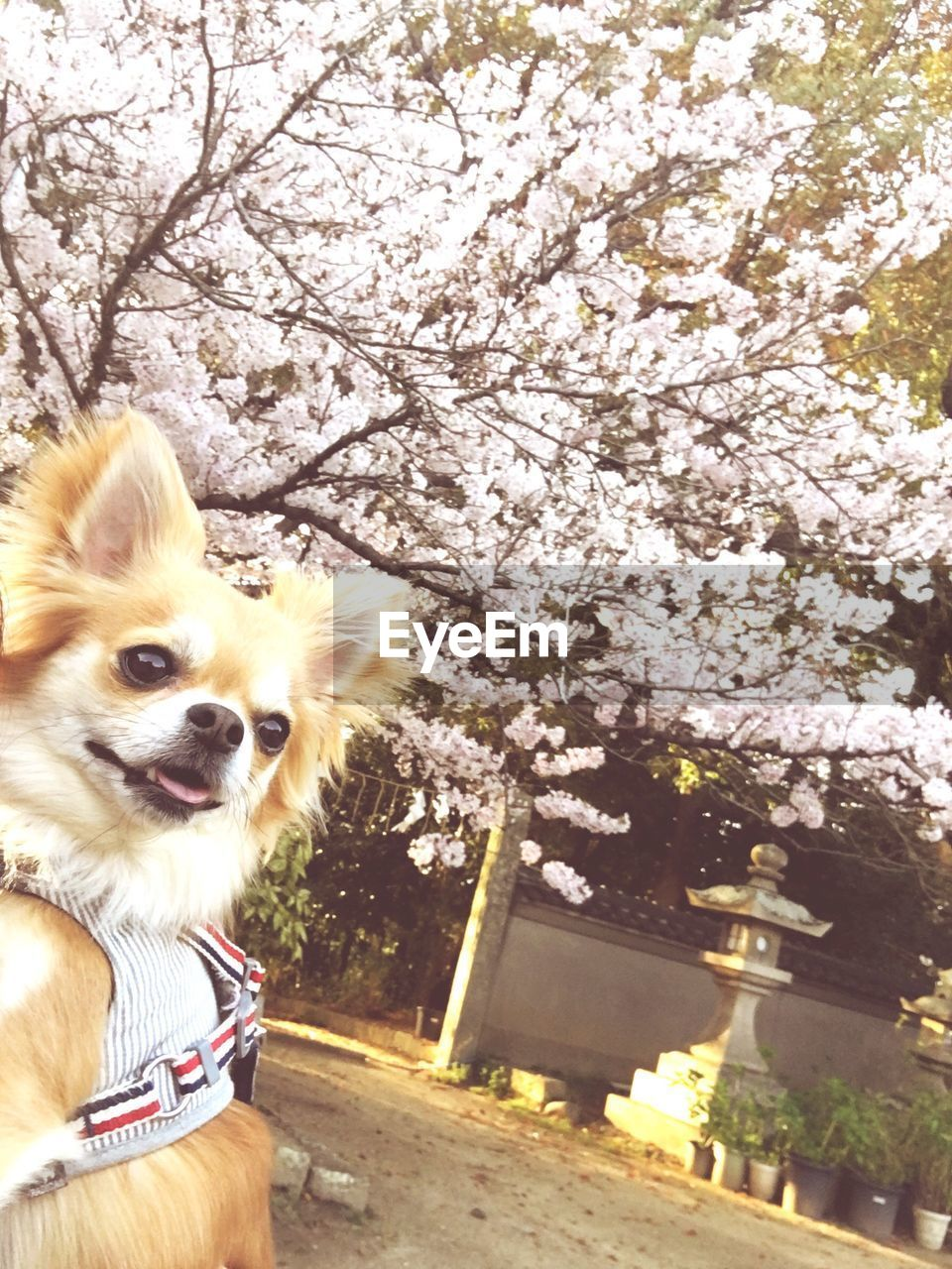 dog, pets, tree, domestic animals, one animal, flower, animal themes, blossom, no people, day, nature, mammal, springtime, outdoors, fragility, branch, beauty in nature, close-up, freshness