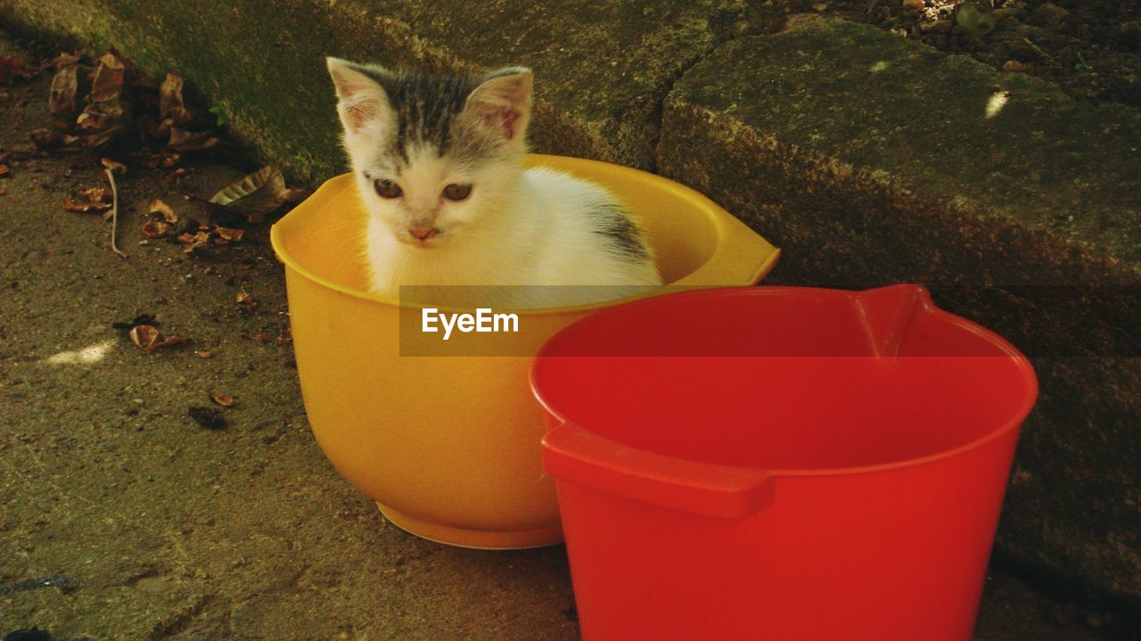 animal themes, one animal, domestic animals, pets, domestic cat, mammal, plastic, no people, day, yellow, outdoors, full length, toilet bowl