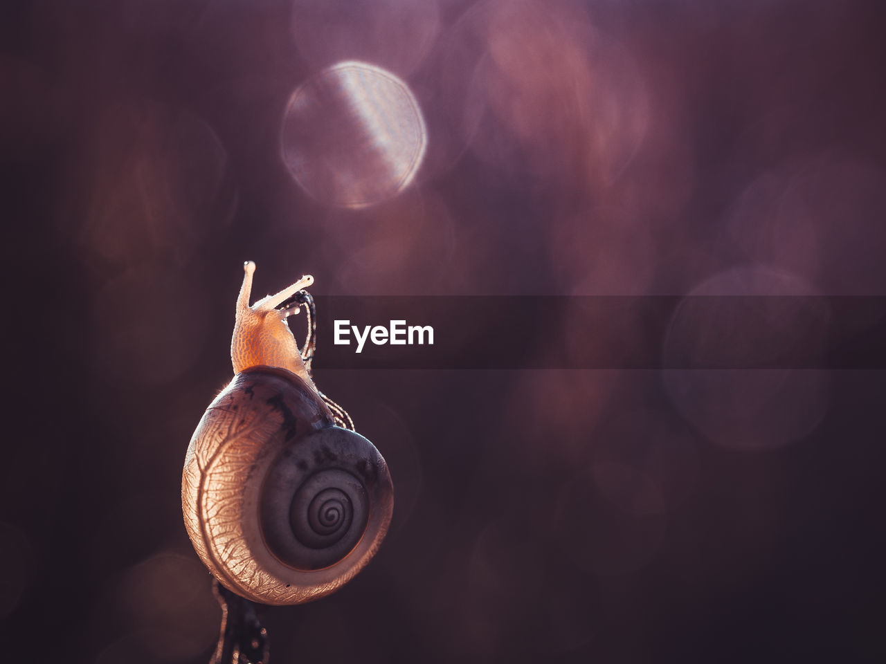 mollusk, gastropod, snail, shell, animal shell, animal wildlife, close-up, animals in the wild, one animal, animal themes, invertebrate, animal, no people, focus on foreground, nature, spiral, animal body part, day, beauty in nature, selective focus, marine