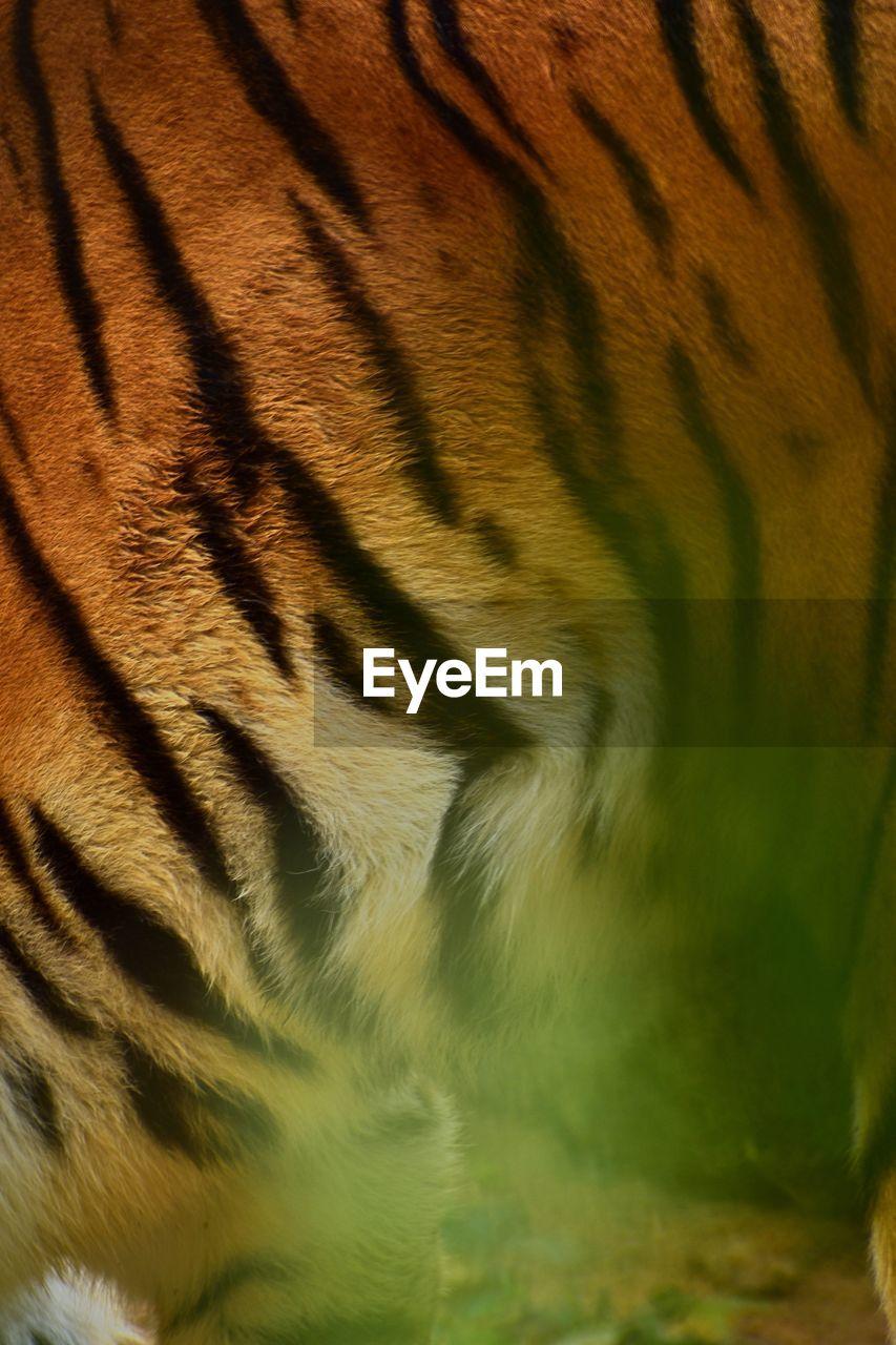 Full frame shot of a tiger