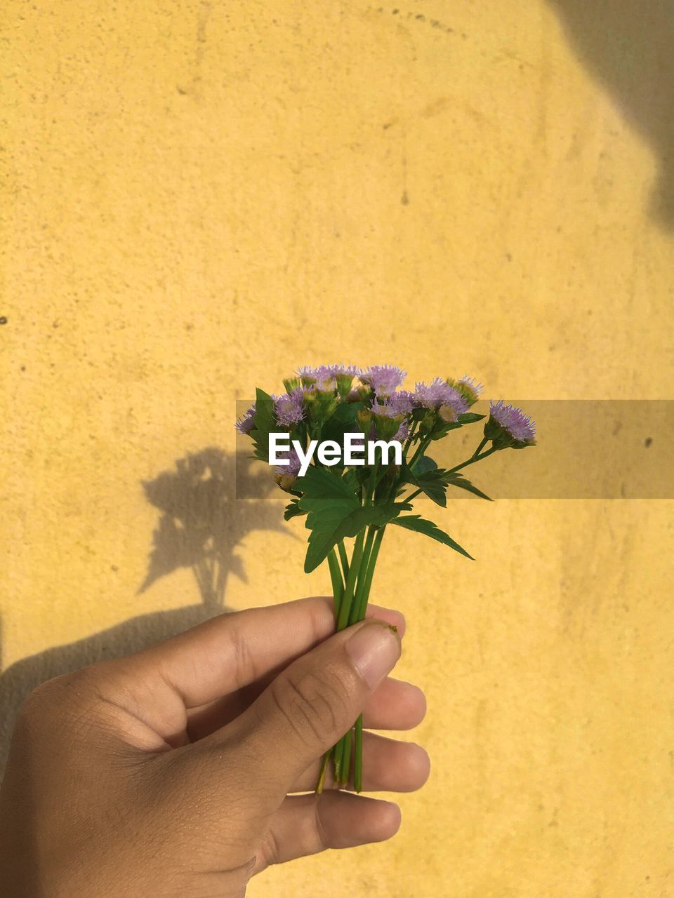 human hand, hand, flowering plant, flower, holding, human body part, plant, one person, fragility, freshness, real people, vulnerability, nature, yellow, body part, wall - building feature, unrecognizable person, personal perspective, close-up, finger, flower head, flower arrangement, bouquet, human limb, bunch of flowers