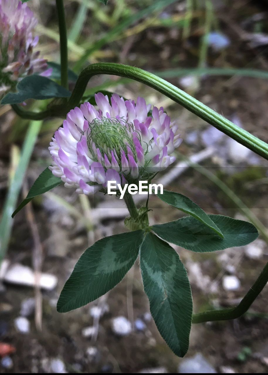 flower, growth, nature, leaf, plant, beauty in nature, fragility, petal, purple, freshness, no people, focus on foreground, outdoors, day, close-up, blooming, flower head