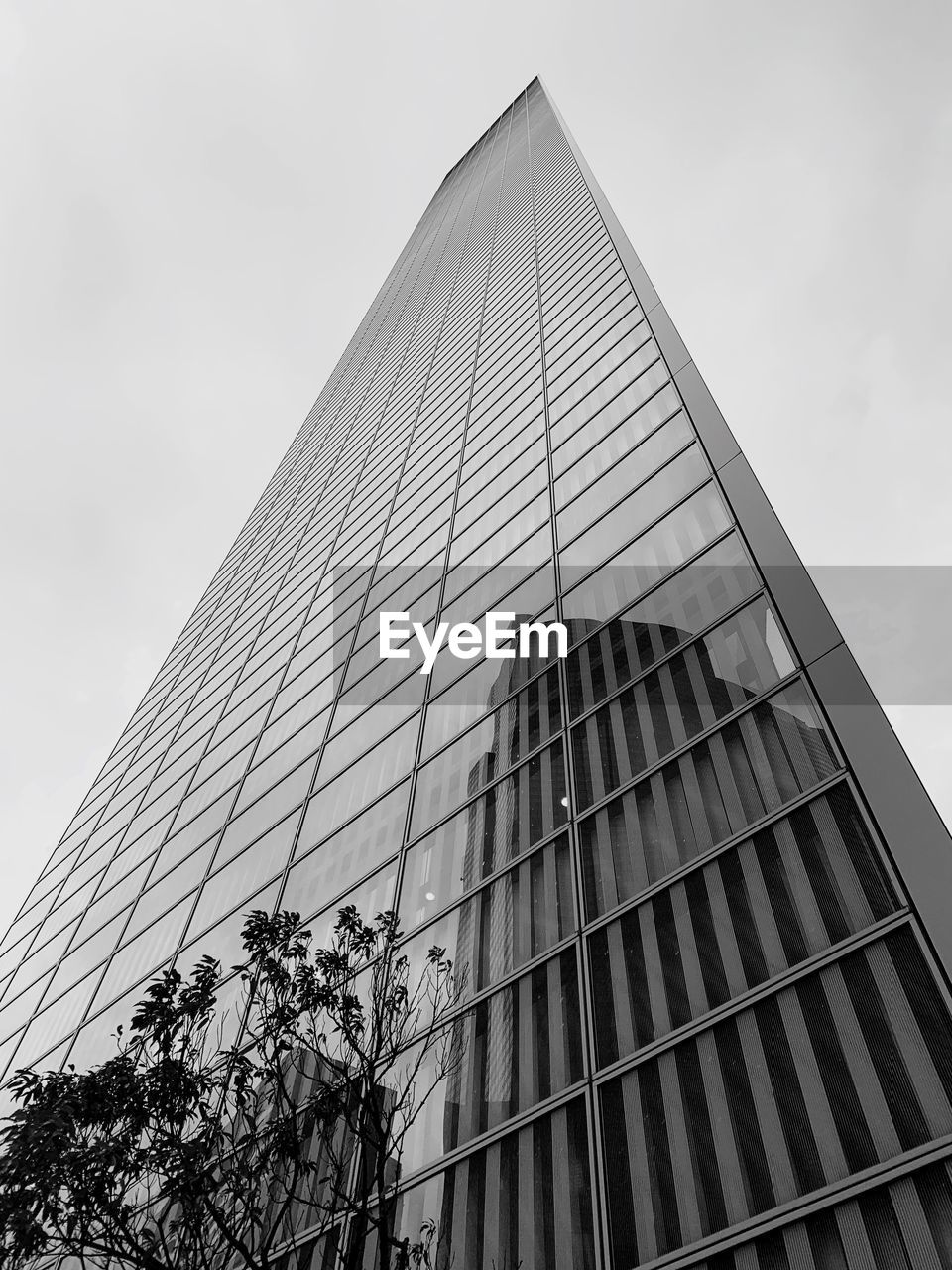 built structure, building exterior, architecture, sky, low angle view, modern, building, city, office building exterior, no people, nature, office, tall - high, day, skyscraper, clear sky, outdoors, glass - material, tower, tree