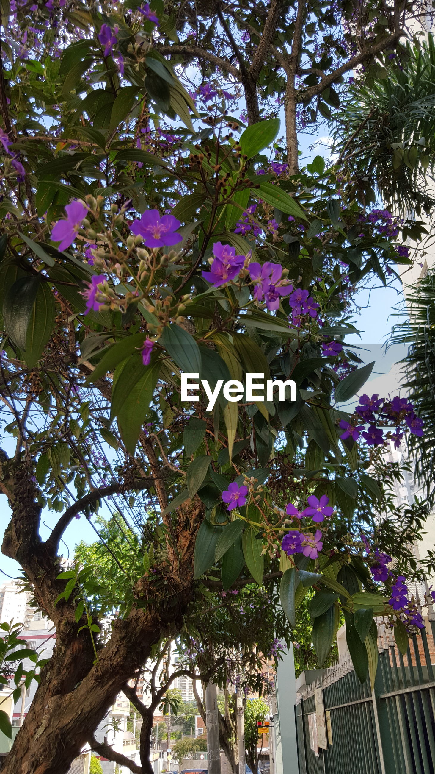 Low angle view of purple flowers growing on tree