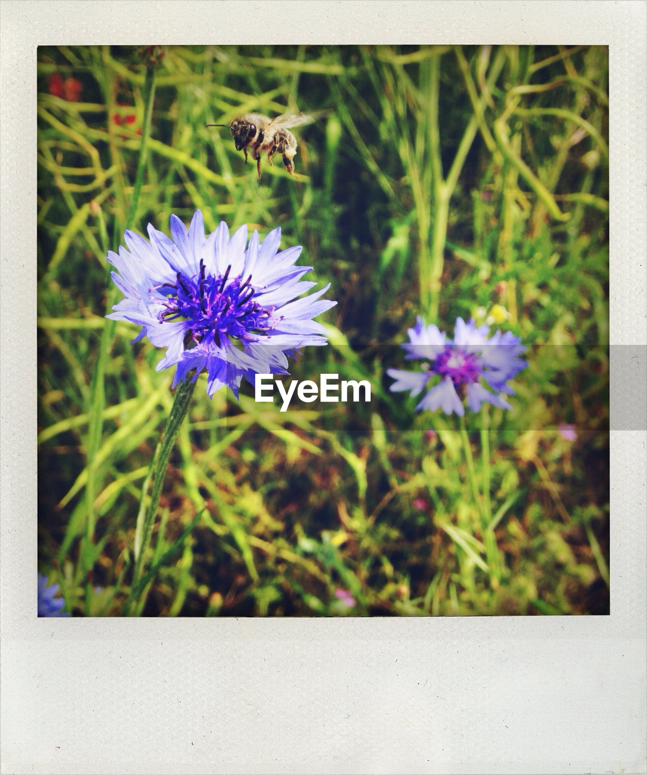 flower, freshness, purple, fragility, growth, beauty in nature, petal, flower head, nature, plant, close-up, blooming, stem, focus on foreground, in bloom, field, blossom, selective focus, wildflower, botany