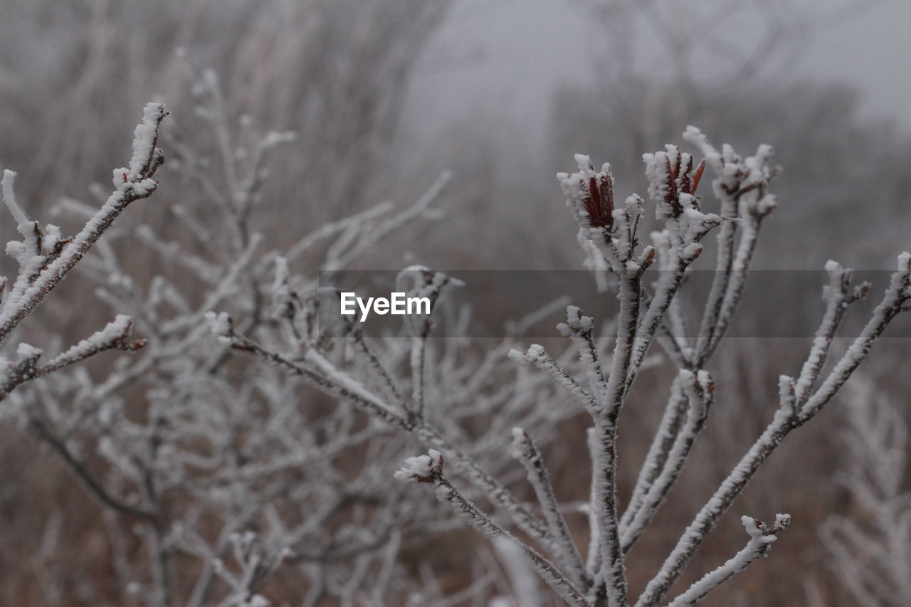 winter, cold temperature, snow, nature, frozen, weather, focus on foreground, beauty in nature, frost, no people, day, ice, close-up, outdoors, plant, tranquility, fragility, freshness, tree