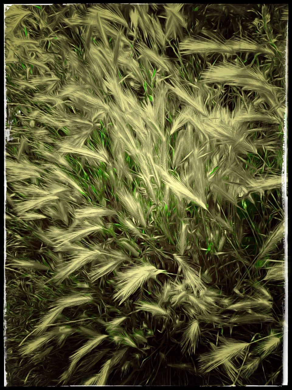 backgrounds, full frame, no people, grass, field, nature, growth, plant, day, black background, close-up, outdoors, beauty in nature, freshness
