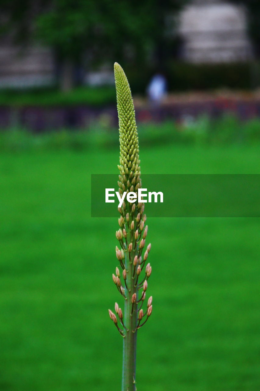 Close-up of plant on field