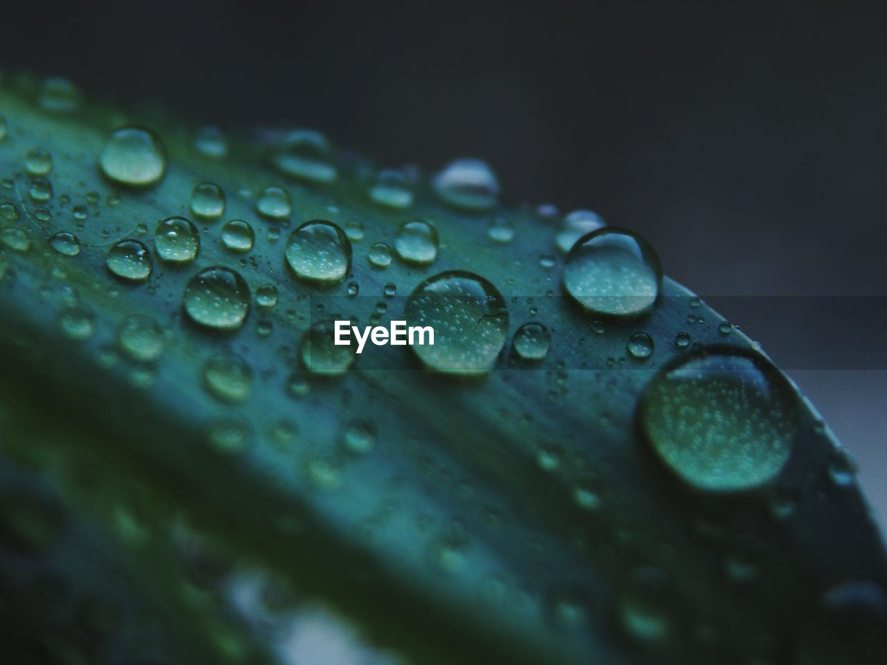 drop, wet, close-up, water, no people, selective focus, green color, plant part, leaf, nature, rain, plant, beauty in nature, growth, pattern, raindrop, freshness, day, purity, outdoors, rainy season, dew, leaves