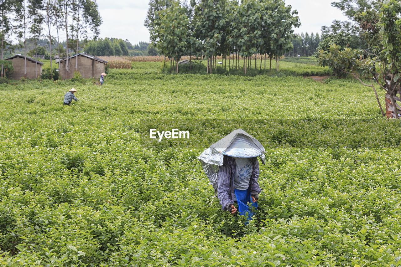 Farmers working at farm
