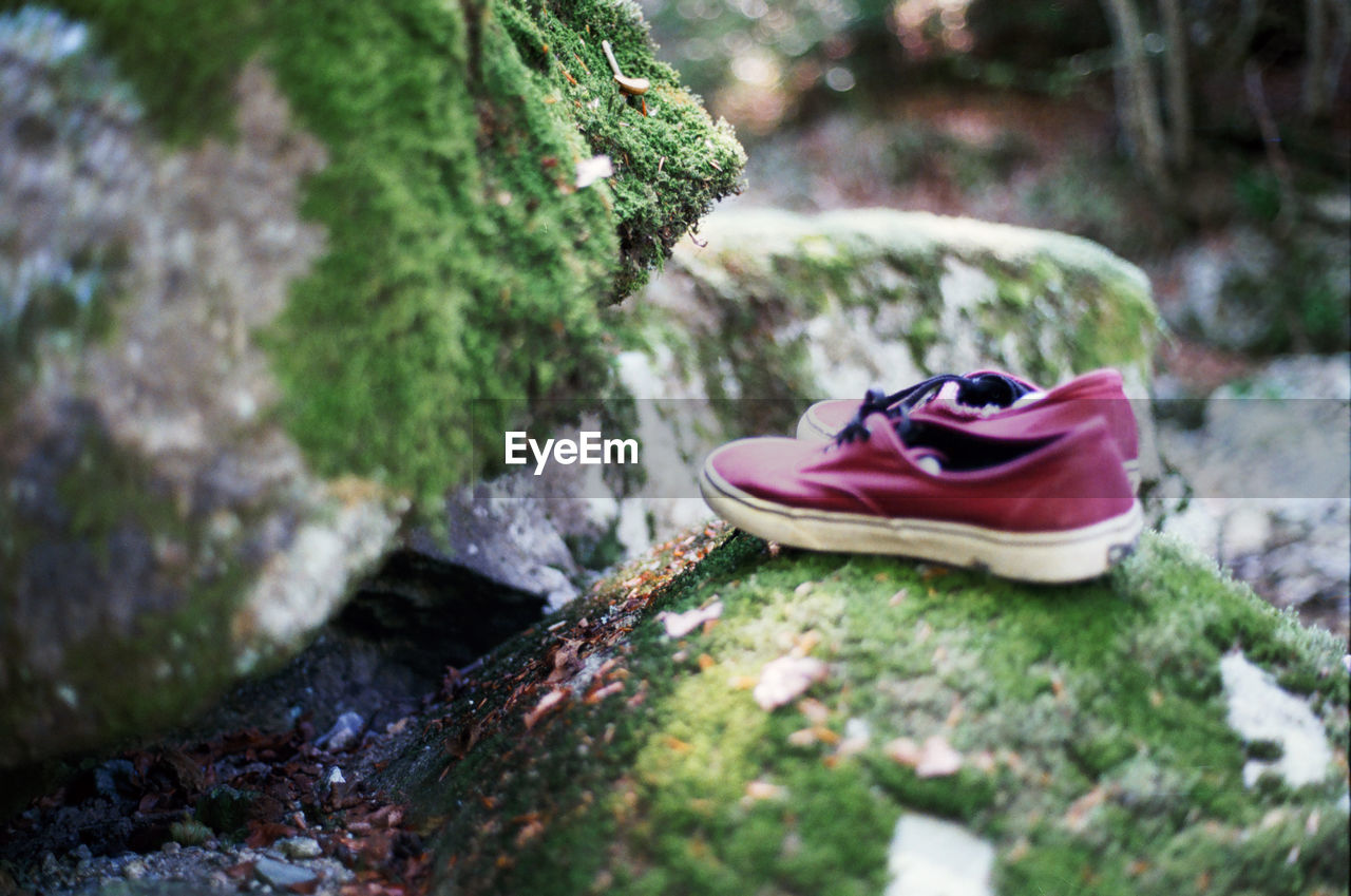 selective focus, solid, day, rock, plant, rock - object, moss, no people, close-up, tree, nature, shoe, outdoors, growth, tree trunk, trunk, toy, rough, still life, land, personal accessory