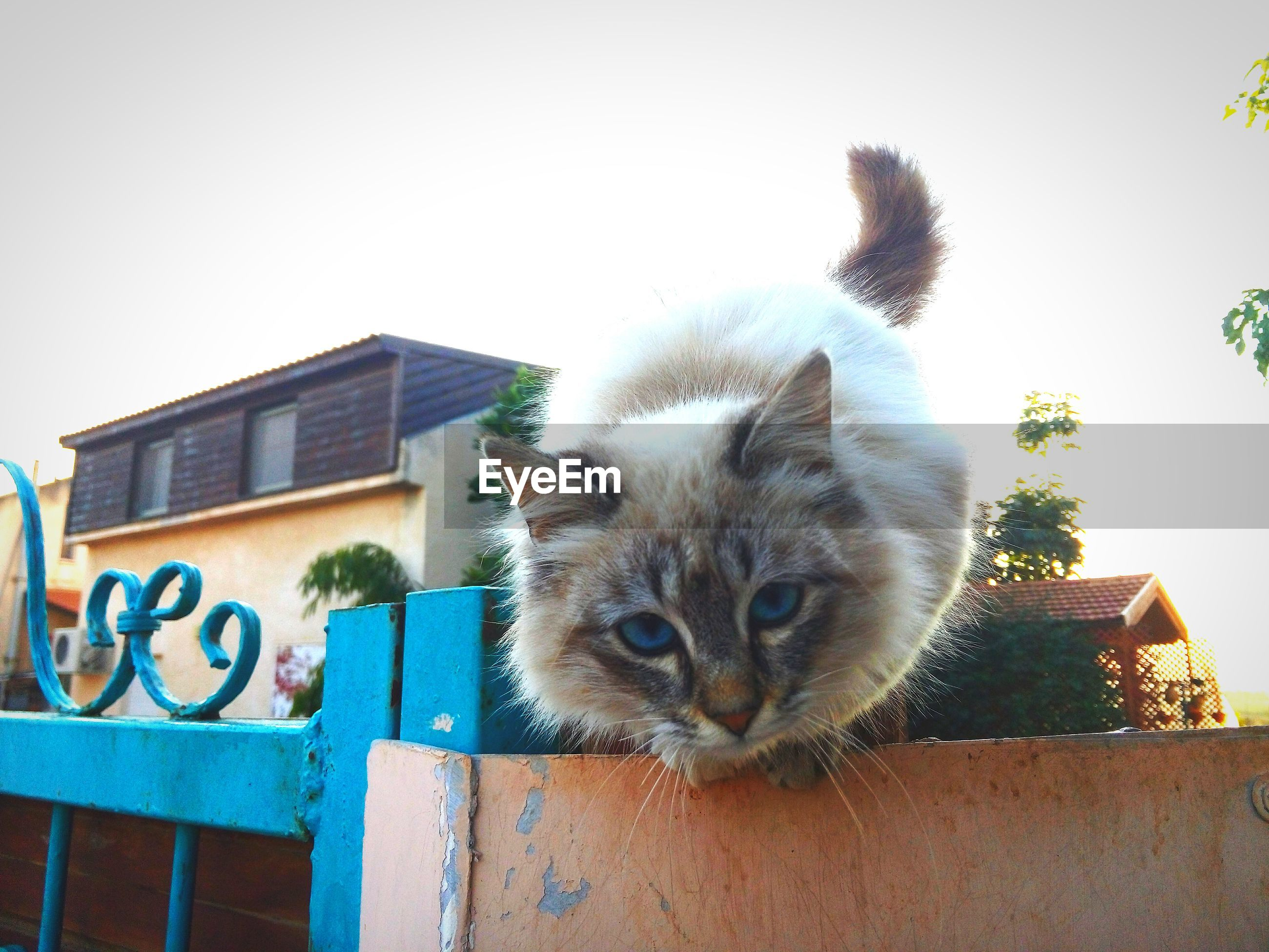 domestic cat, one animal, animal themes, cat, domestic animals, mammal, pets, feline, whisker, portrait, low angle view, looking at camera, building exterior, clear sky, architecture, front view, built structure, blue, alertness, outdoors