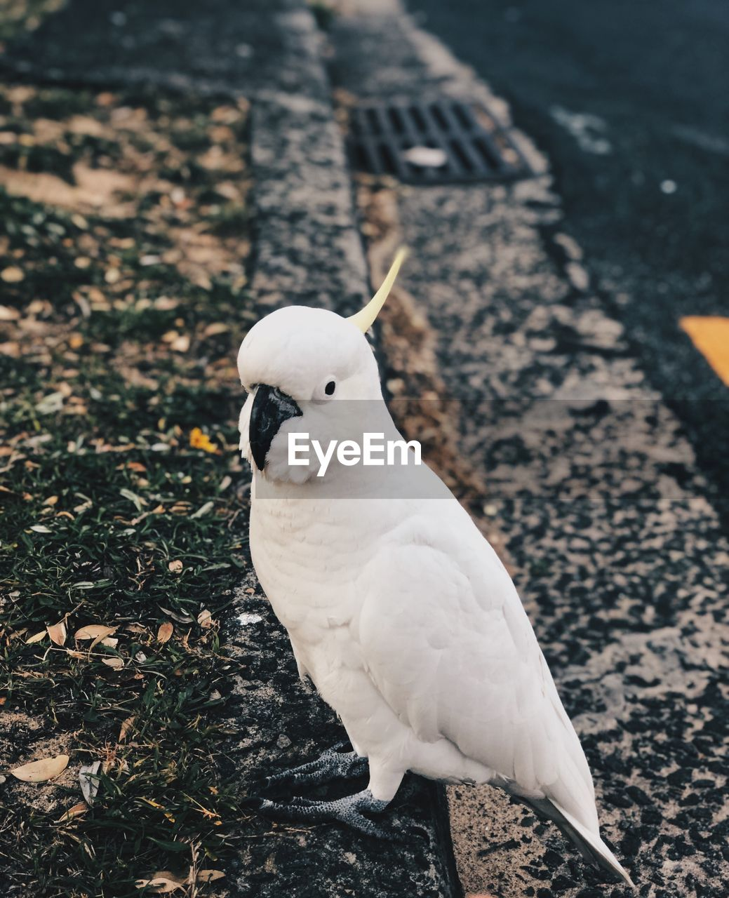 bird, vertebrate, animal wildlife, animals in the wild, one animal, white color, day, no people, high angle view, perching, nature, focus on foreground, outdoors, land, field, close-up, looking
