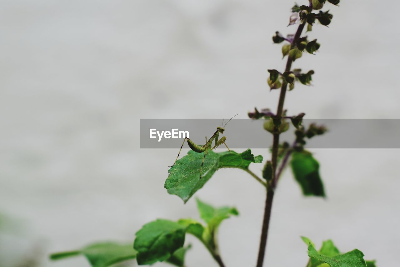 leaf, plant, plant part, growth, nature, close-up, beauty in nature, focus on foreground, no people, green color, day, freshness, outdoors, vulnerability, selective focus, plant stem, fragility, tranquility, flower