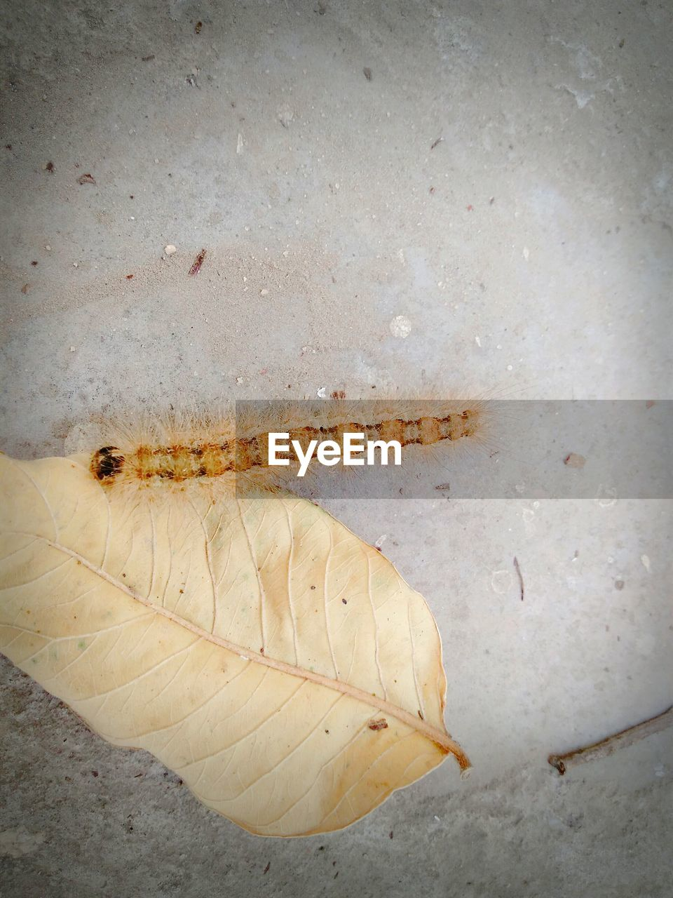 insect, animal themes, animals in the wild, no people, one animal, close-up, day, nature, outdoors, leaf
