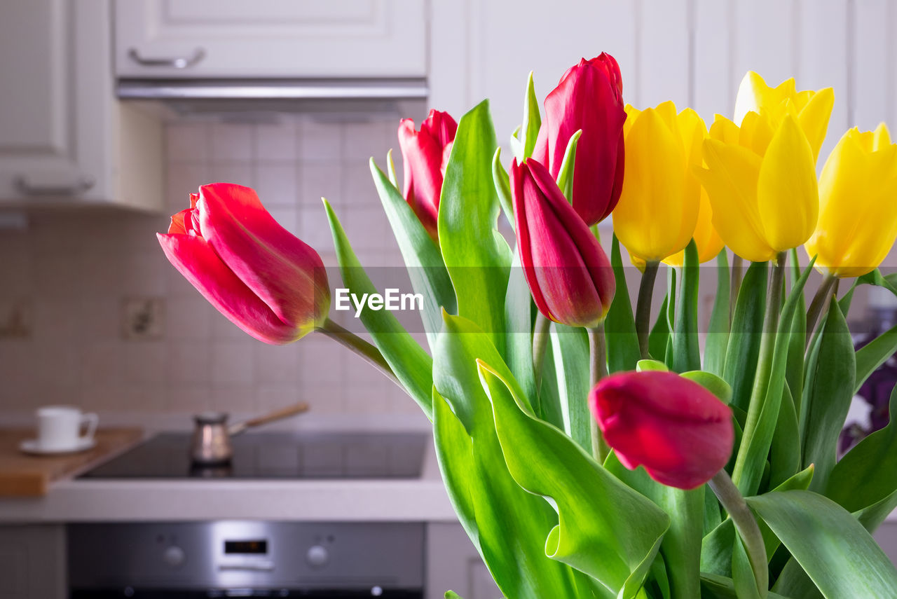 CLOSE-UP OF RED TULIP FLOWERS AT HOME