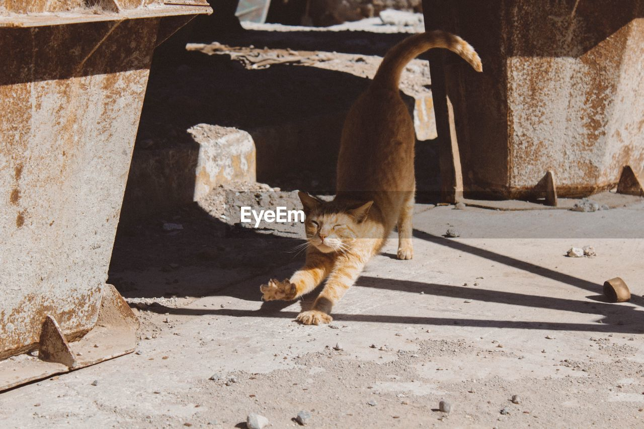mammal, animal, animal themes, vertebrate, domestic animals, one animal, domestic, pets, no people, animal wildlife, day, sunlight, nature, cat, animals in the wild, feline, young animal, outdoors, domestic cat