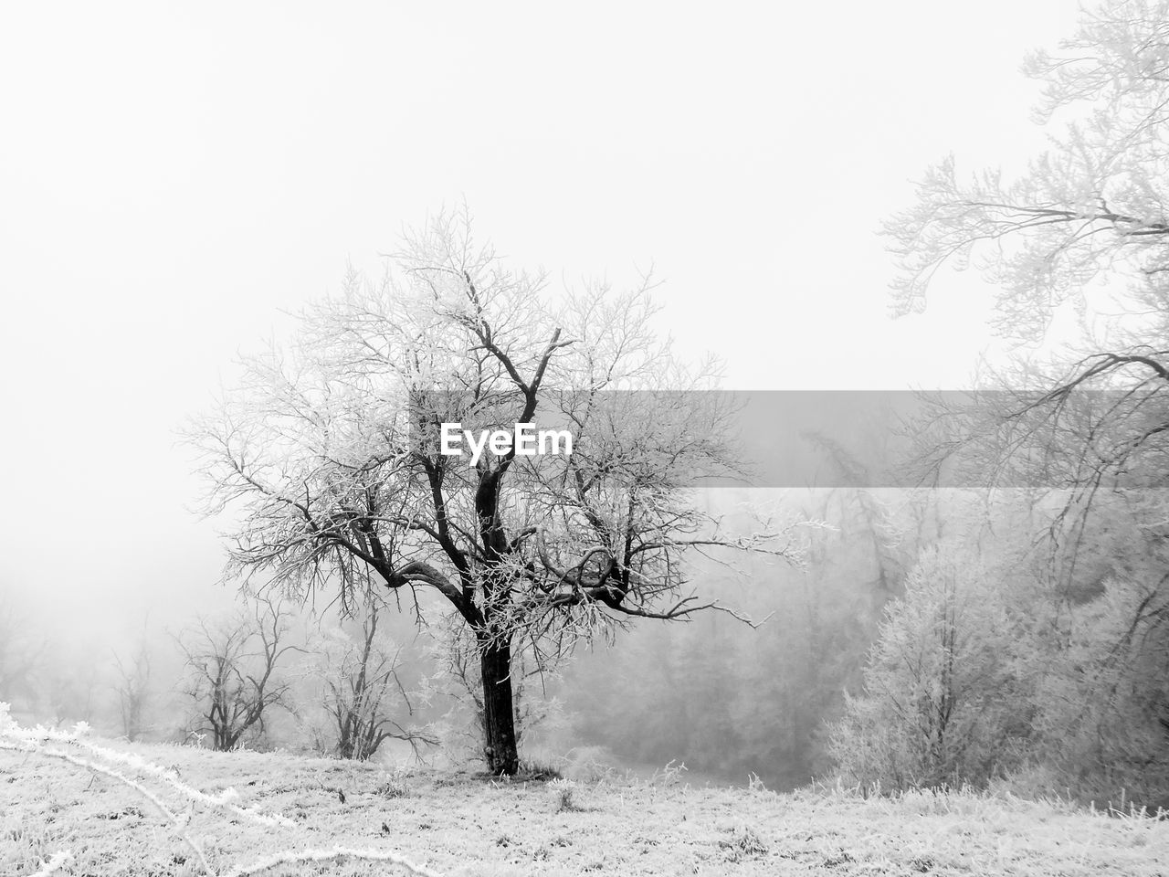 tree, cold temperature, snow, winter, plant, beauty in nature, bare tree, tranquility, land, scenics - nature, landscape, sky, environment, field, clear sky, no people, tranquil scene, nature, non-urban scene, outdoors, isolated, cold, snowing
