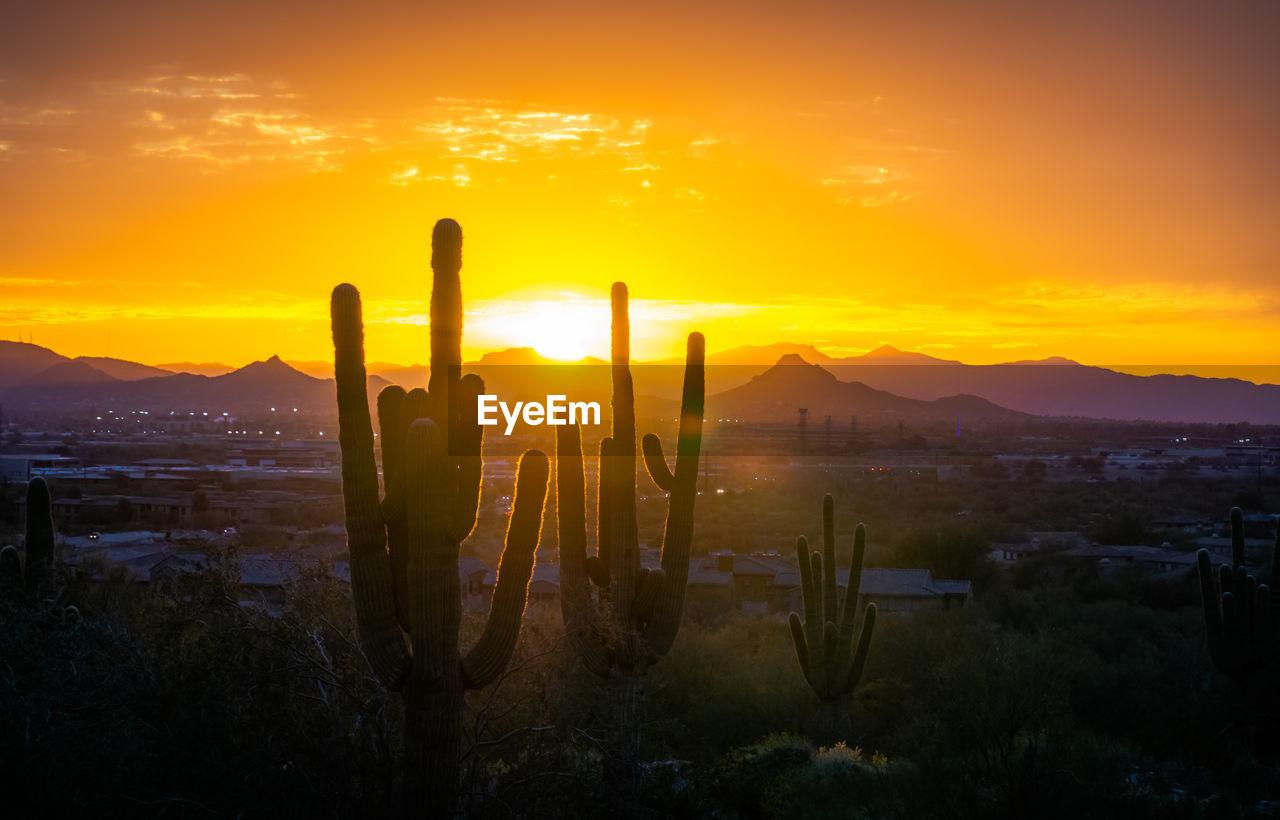 Cactus growing on land against orange sky