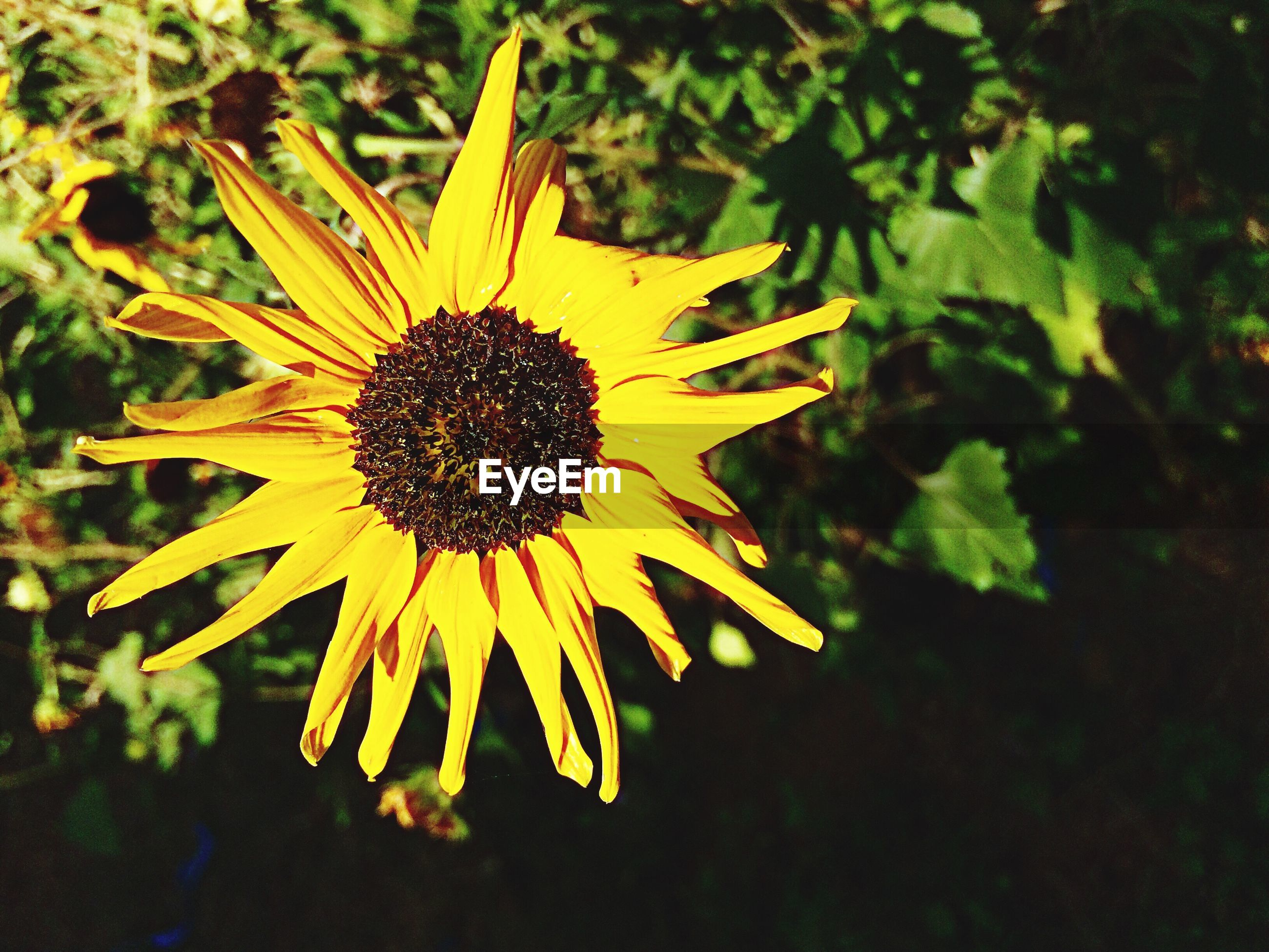 growth, flower, nature, yellow, beauty in nature, petal, fragility, plant, flower head, outdoors, no people, close-up, day, freshness