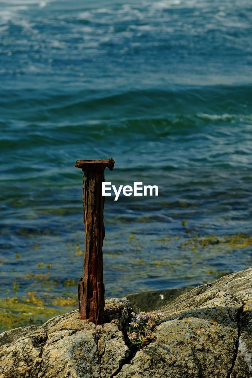 water, day, no people, nature, rock, focus on foreground, solid, sea, wood - material, land, outdoors, rock - object, beauty in nature, beach, one animal, tranquility, post, animal, wooden post