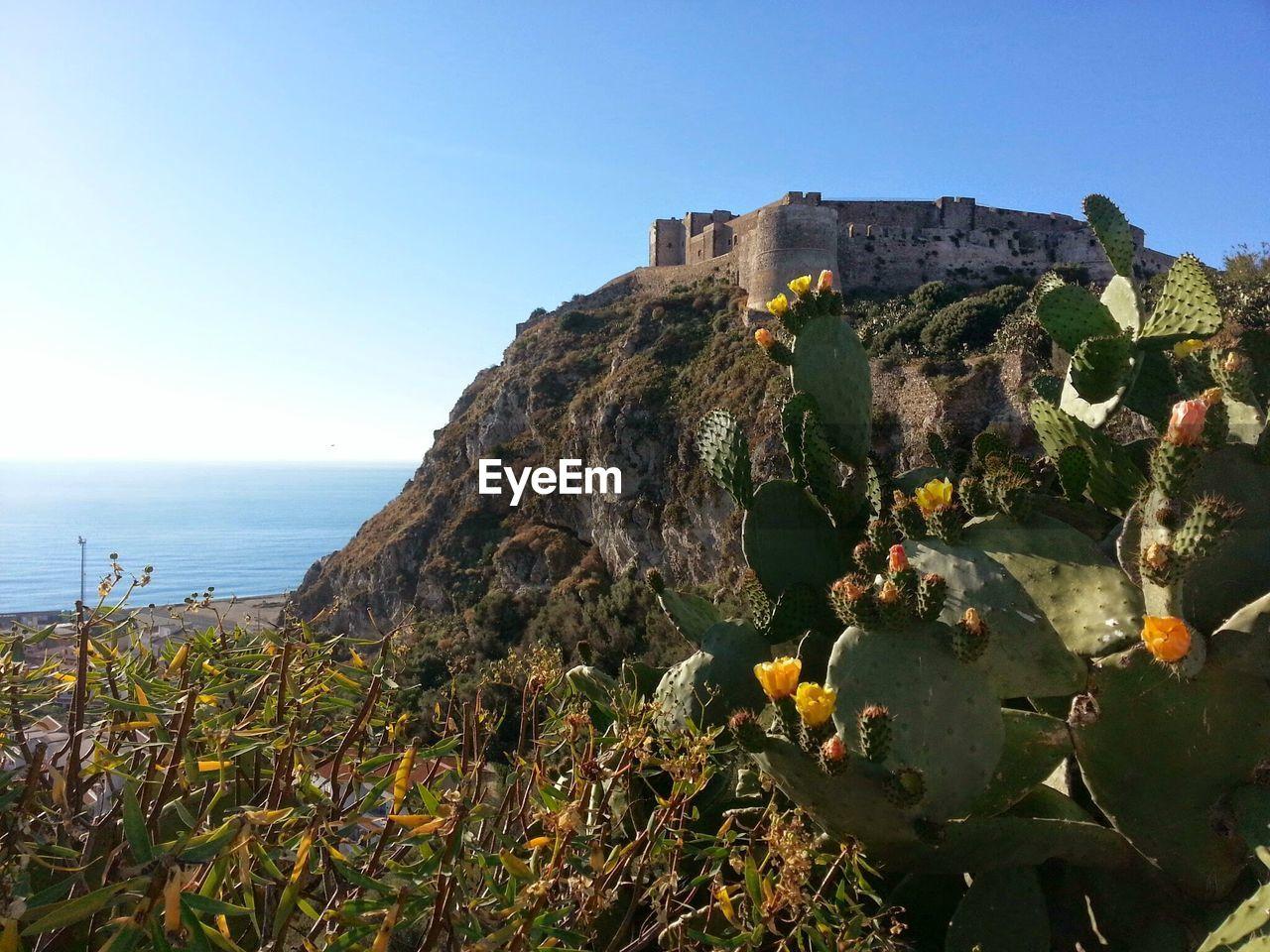 Cactus Growing Against Milazzo Castle