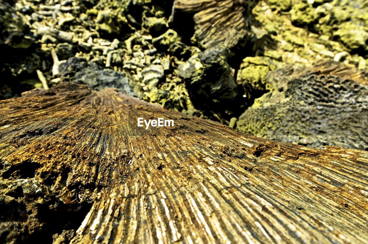 wood - material, textured, day, rough, outdoors, close-up, no people, nature, tree stump, sunlight, tree ring