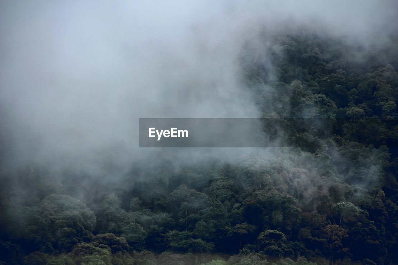 Scenic View Of Forest During Foggy Weather