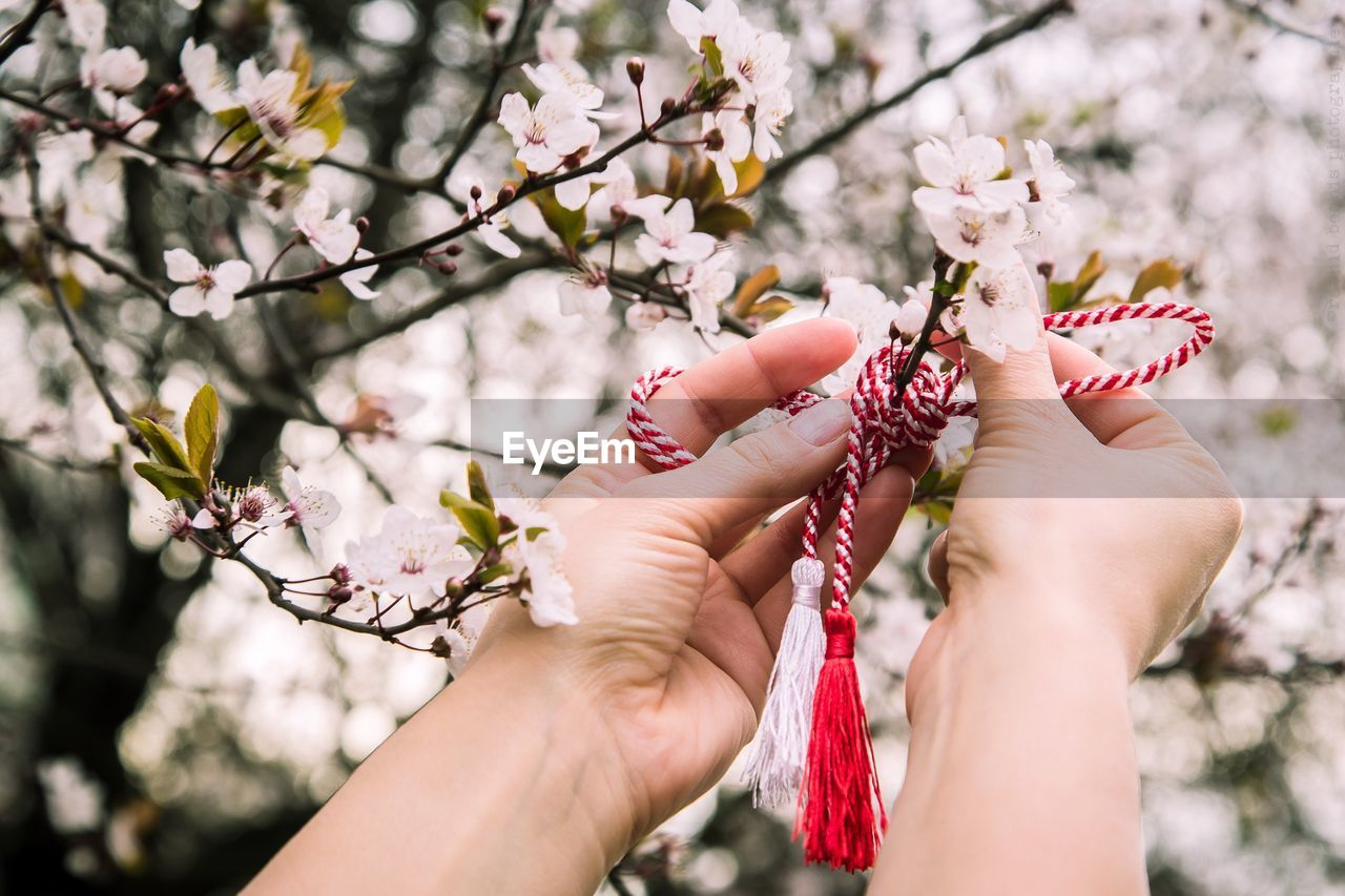 Close-Up Of Hand Tying Martisor On Flowers Blooming On Tree